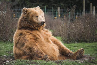 05 - Journée mondiale des ours et nouvelle gamme Biodiversité